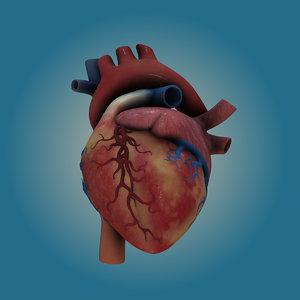 3d lwo human heart