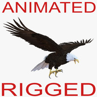 3d bald eagle animation
