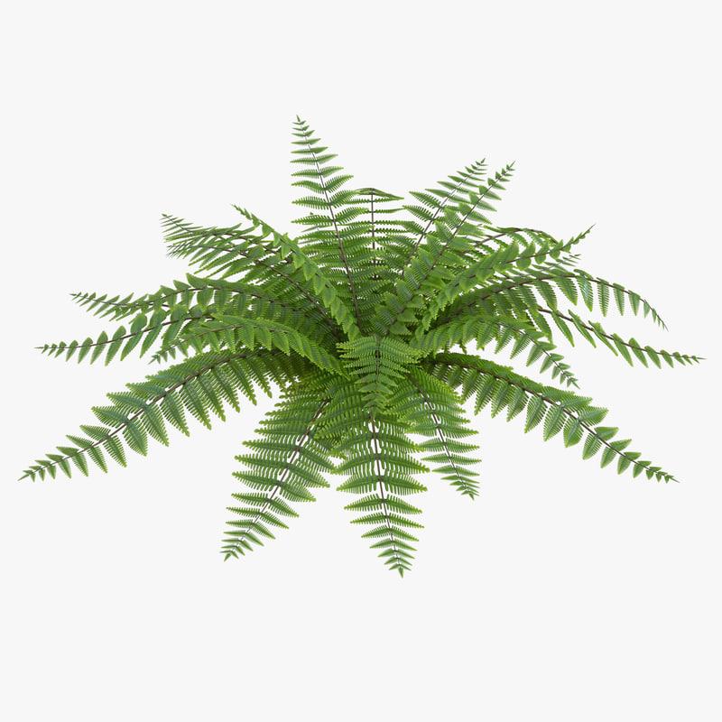 fern realistic 3d model