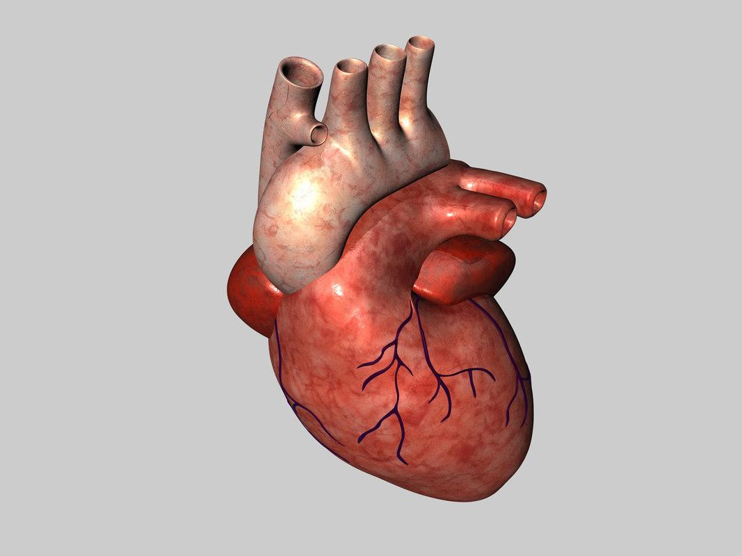 human heart c4d
