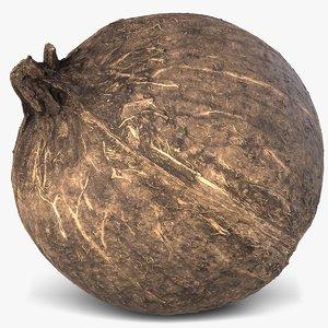 3d model coconut 3