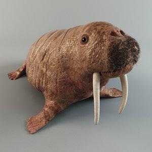 3d walrus