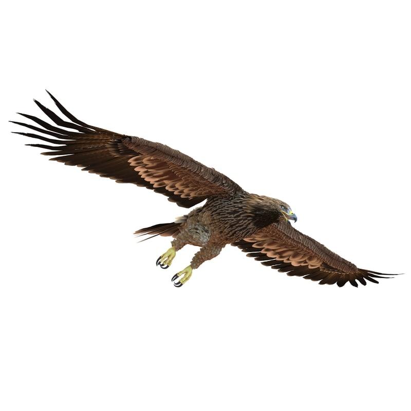 max imperial eagle pose 6