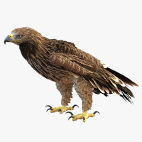 3d imperial eagle pose 5 model