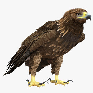 golden eagle pose 5 3d model