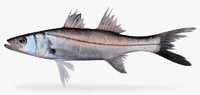 blackfin snook fbx