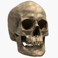 Human Skull (Lowpoly&Highpoly)