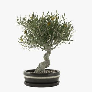 bonsai olive tree 3d max