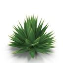 agave 3D models