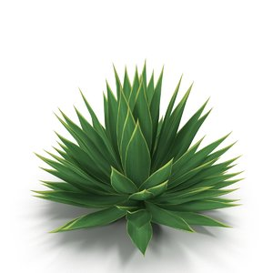 agave plant 3d max