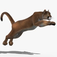 cougar fur animation cat 3d model