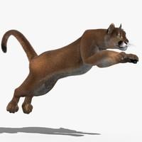 cougar fur animation cat 3d model