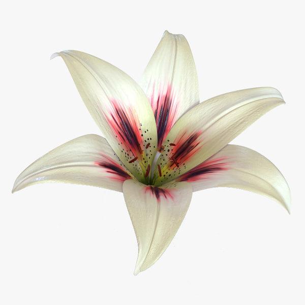 lily flower 3d c4d