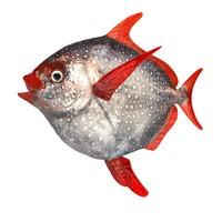 opah fish lampris 3d 3ds