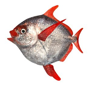 opah fish lampris 3d 3ds