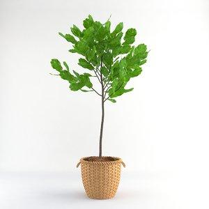 3d model fiddle leaf