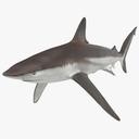 whaler shark 3D models
