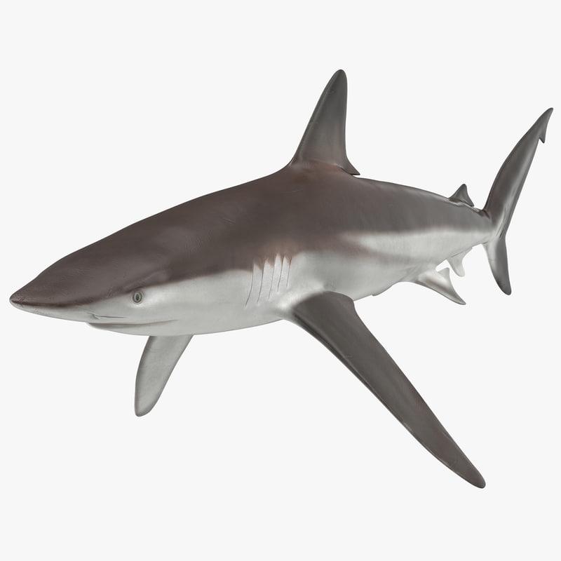 whaler shark 3d model
