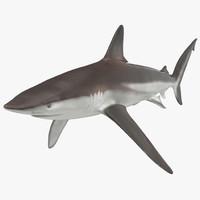 Whaler Shark