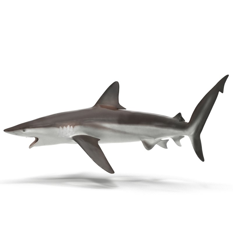 whaler shark pose 2 max