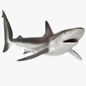 max whaler shark rigged