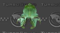 Beetle, old leafbody bug, leaf ghost