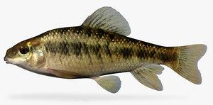 3d erimyzon sucetta lake chubsucker