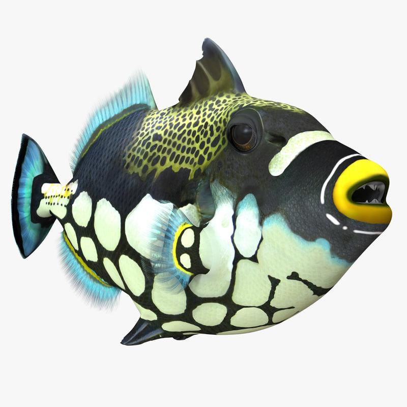 clown trigger fish 3d c4d
