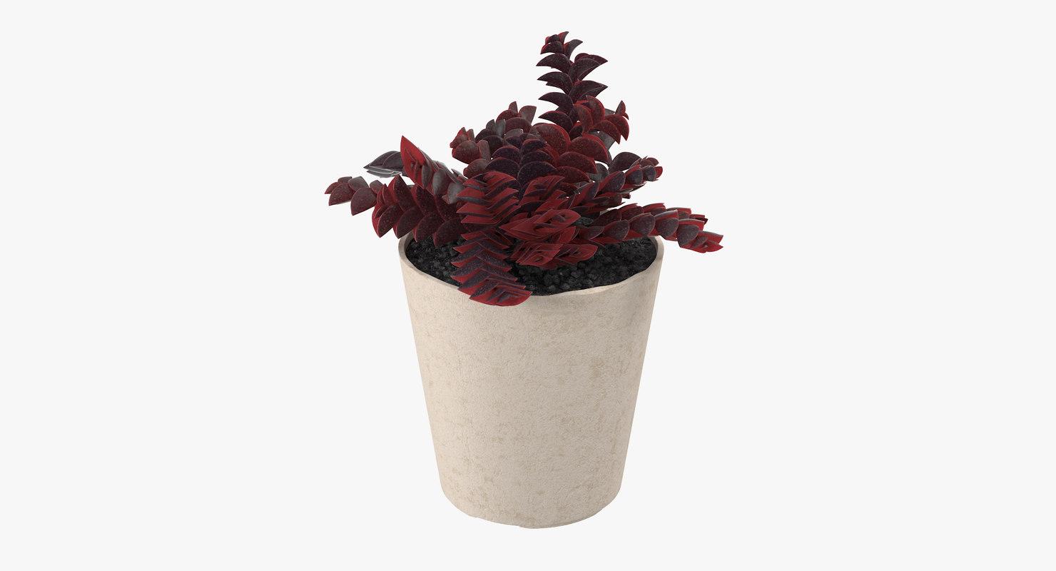 succulent 17 max