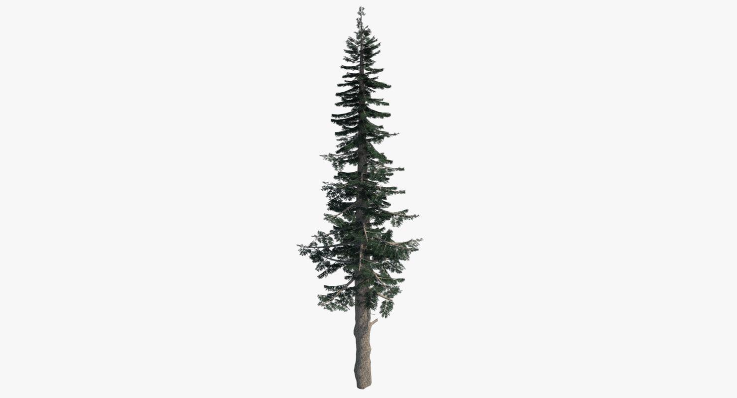 3d pine tree tall
