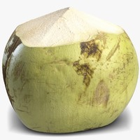 3d green coconut 4 model