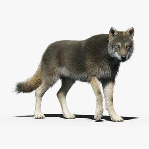 3d gray wolf 3 fur