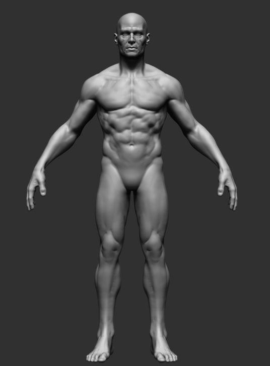 male anatomy 3d obj