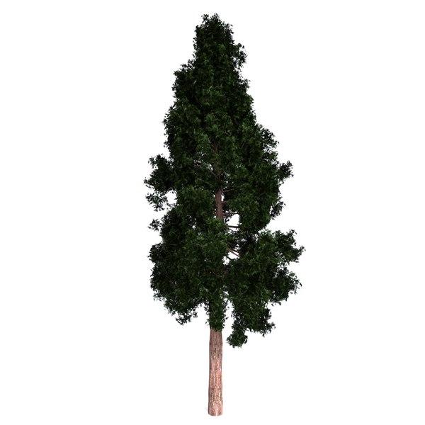 3d redwood model
