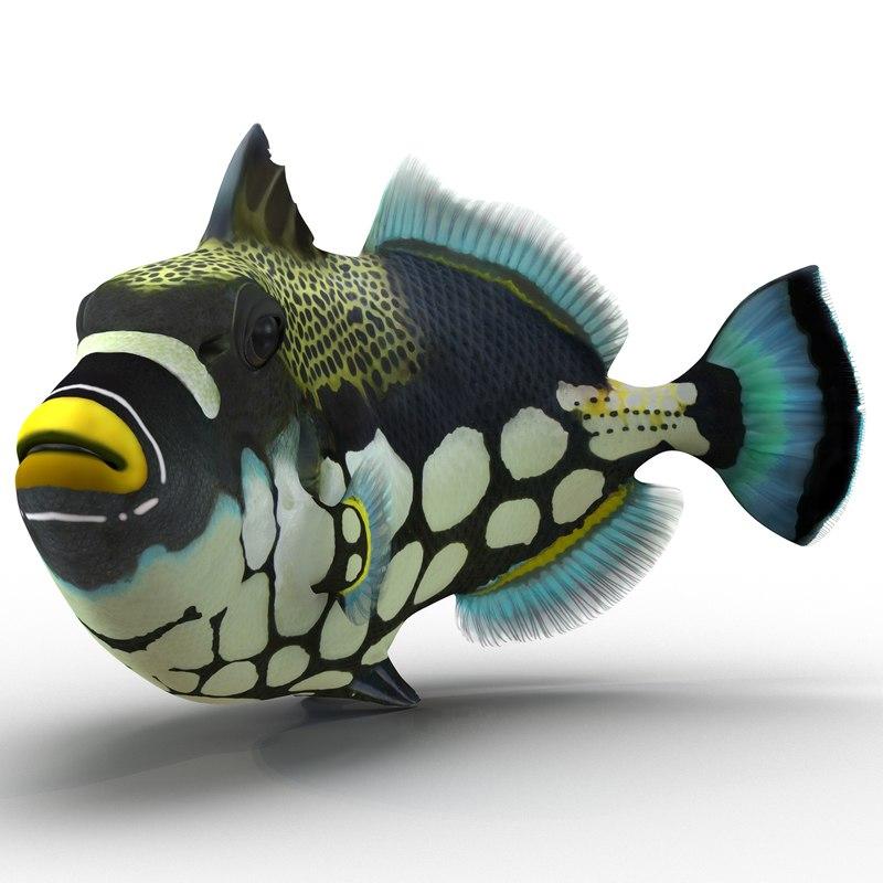 clown trigger fish pose 3d 3ds