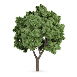3d max sycamore maple tree acer