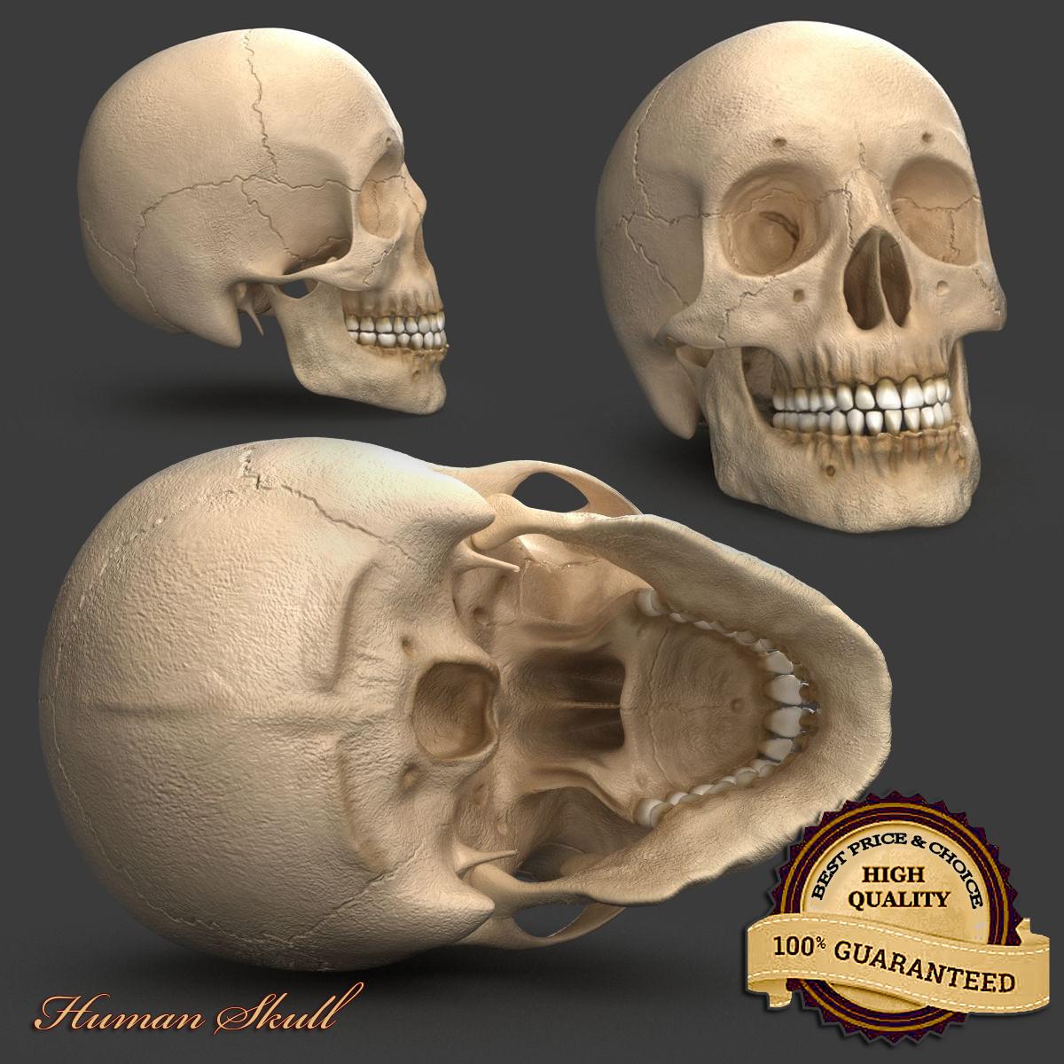3d anatomy model