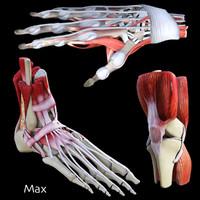 joints 3d model