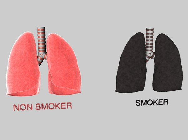 human lungs smokers 3d c4d