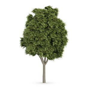 3d model common ash tree fraxinus