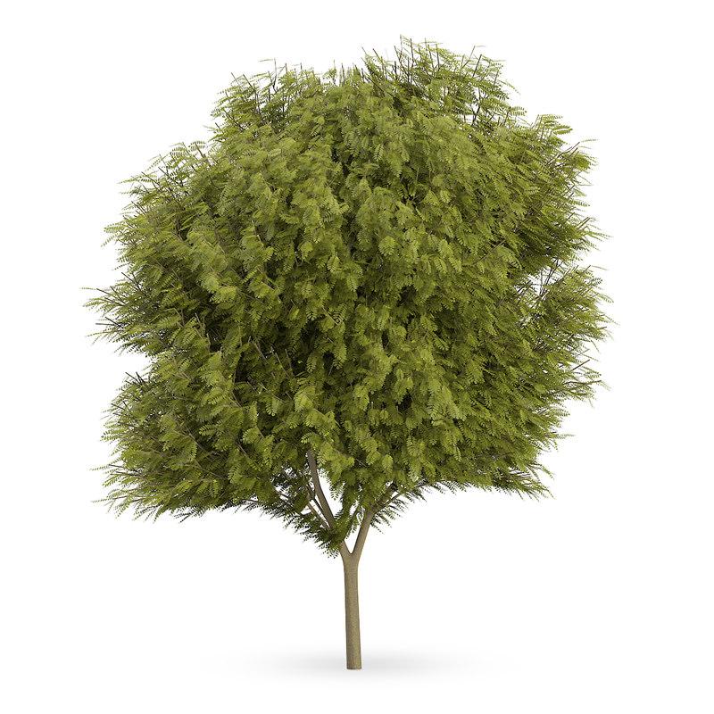 max honey locust tree gleditsia