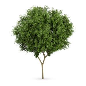 honey locust tree gleditsia c4d