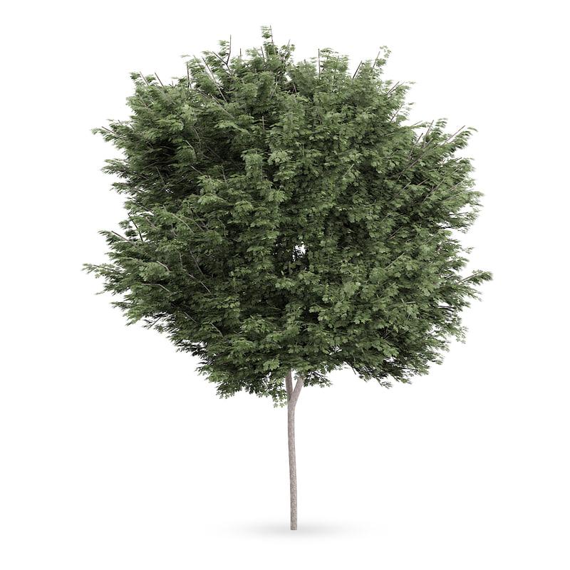 3dsmax field maple tree acer