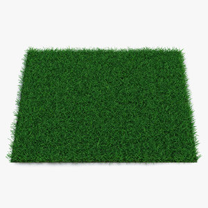 3d model seashore paspalum warm season