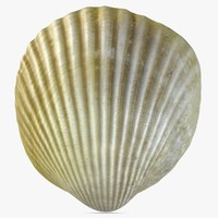 3dsmax sea shell