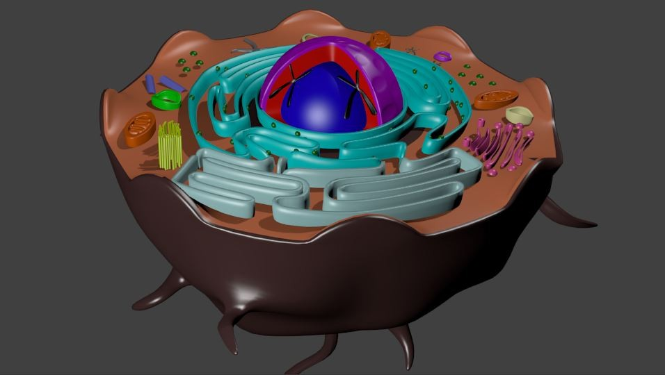 blender animal cell