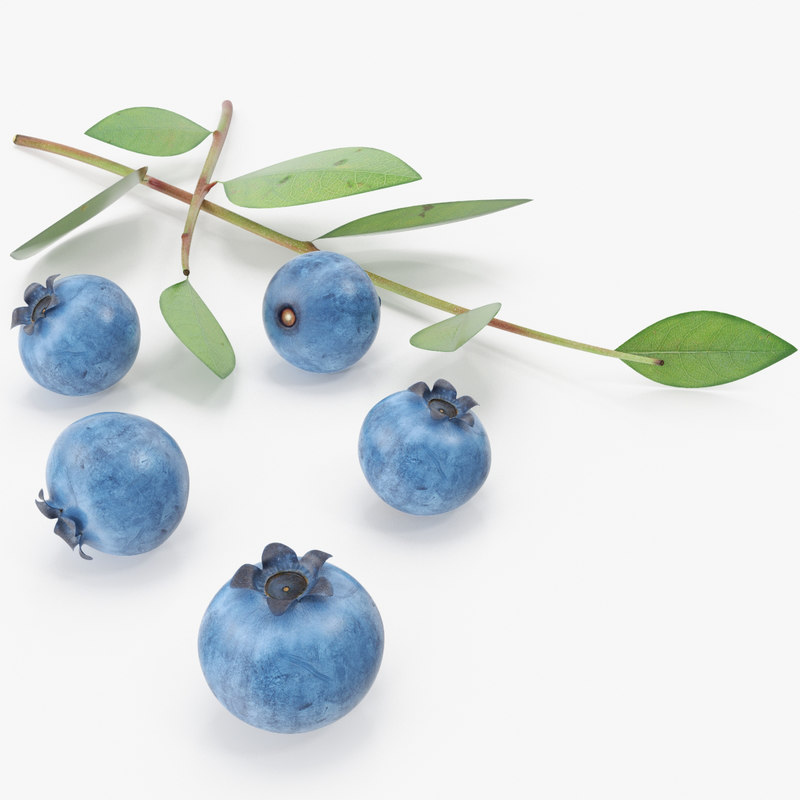 blueberry berry blue 3d model