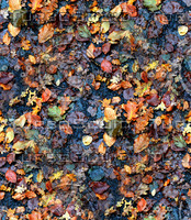 Asphalt with leaves 1