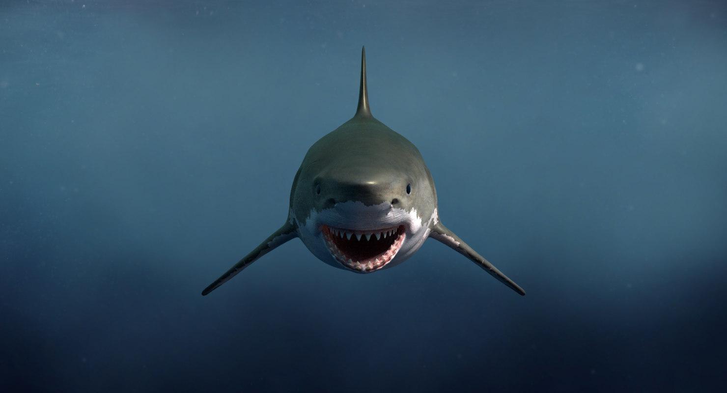 3d model great white shark
