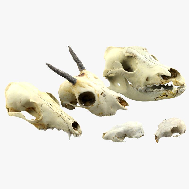 realistic animals skulls max